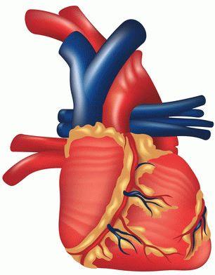 Инфаркт миокарда - Классификация